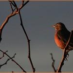 Сочинение на тему Ранняя пташка росу пьёт, а поздняя слёзы льёт