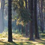 """Сочинение на тему """"Проблема вырубки лесов"""""""
