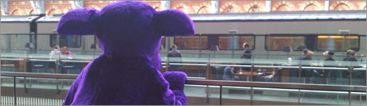 purple-cow